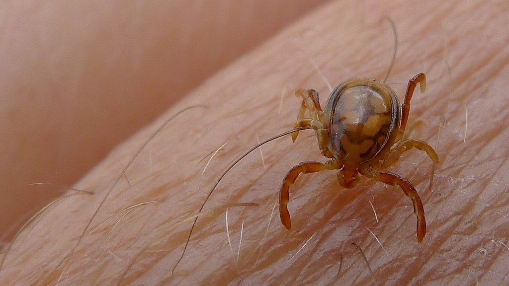 An essential piece of the Lyme disease puzzle has been identified