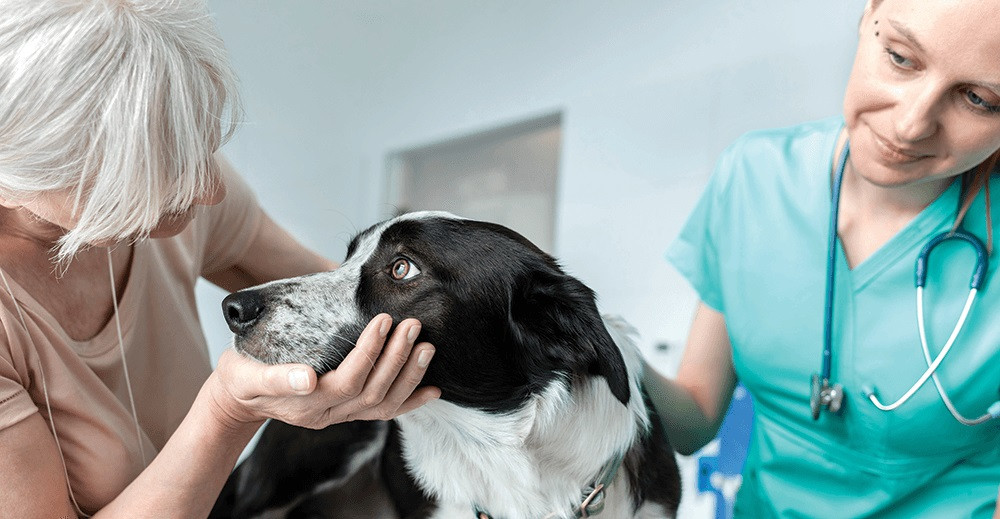Application of Omex sciences to veterinary medicine