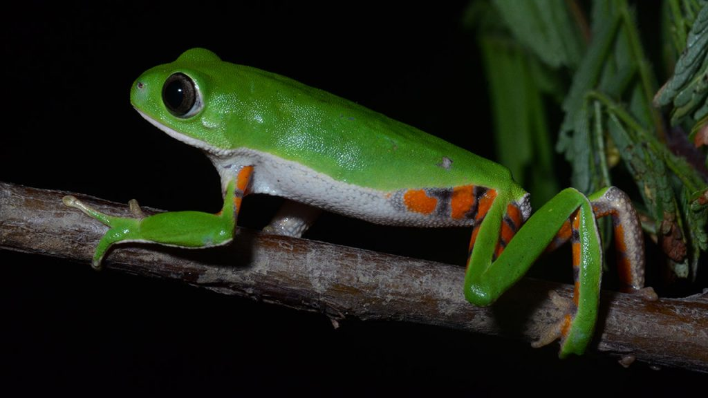 Are you in the mood to discover a new species?  Follow this map