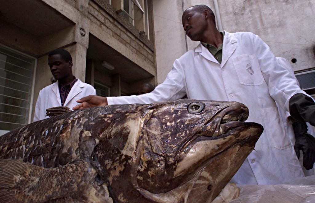 """Surprises fish listed as """"living fossil"""" again"""