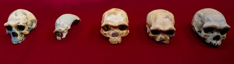 The huge human skull that could change the current view of evolution