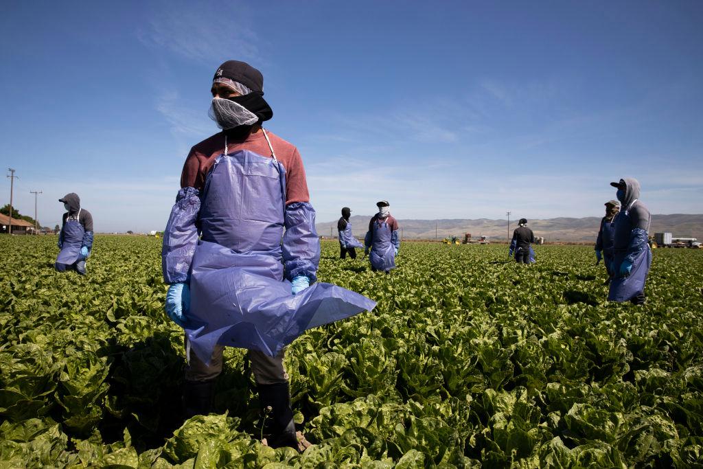 H-2A seasonal farm worker عامل