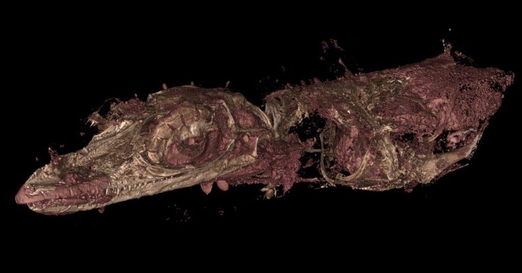 SCIENCE - New exotic fossil species of bird lizards have been taken