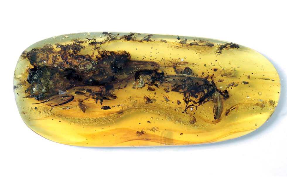 What Was Thought To Be A Small Dinosaur Trapped In Amber Turns Out To Be A 'Strange Animal'