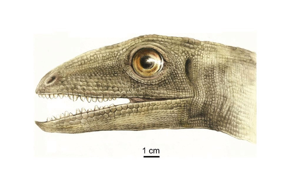 An unexpected discovery hidden in the feces of fossilized dinosaurs shocked experts
