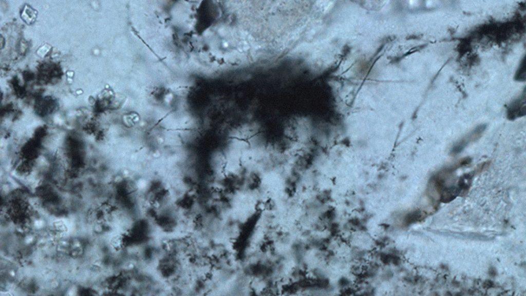 Identifican las huellas más antiguas de la vida primordial en la Tierra datadas hace 3.400 millones de años