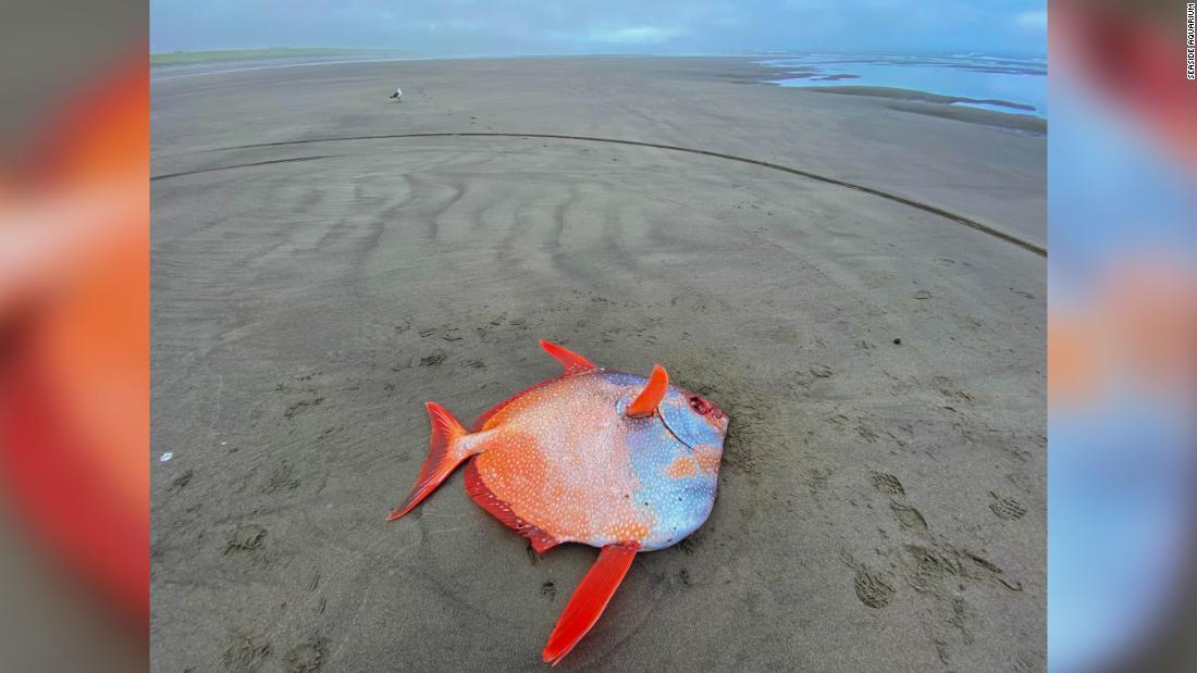 Giant-Oba-Fish-Oregon-Two