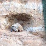 Dinosaur fossils have been found in the interior of São Paulo.  Watch