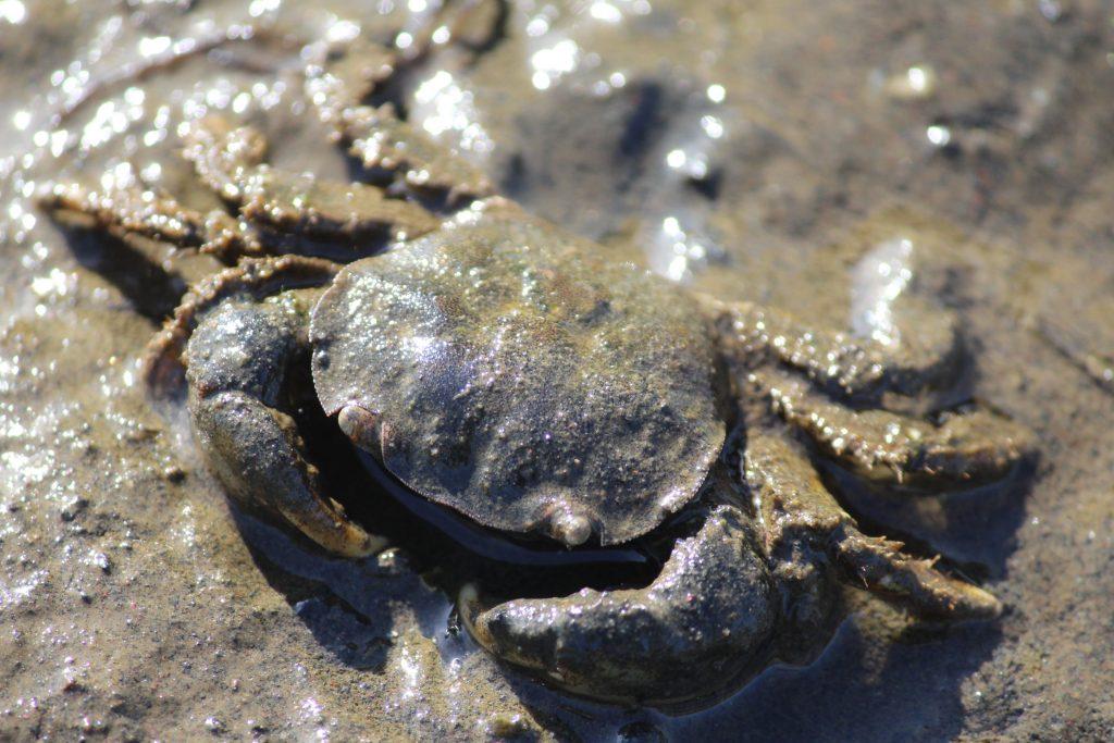 Ucsc study analyzes lipids and fatty acids found in Lenga . crustaceans