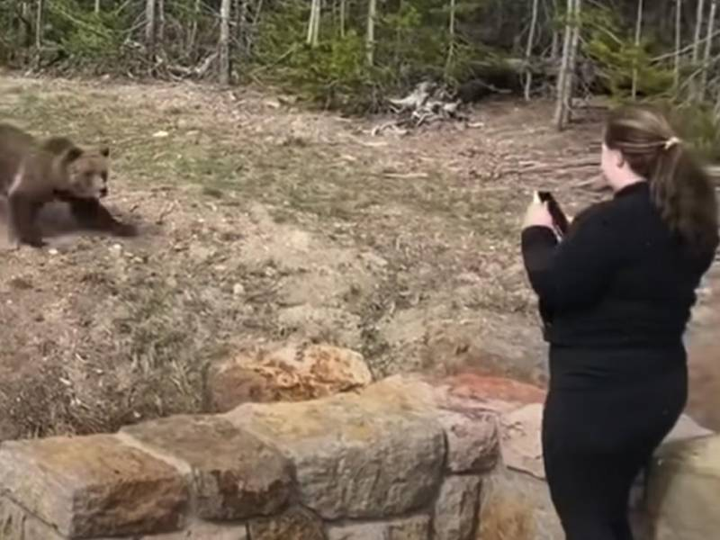 The woman who approached the grizzly bear for a photo has been jailed in the United States